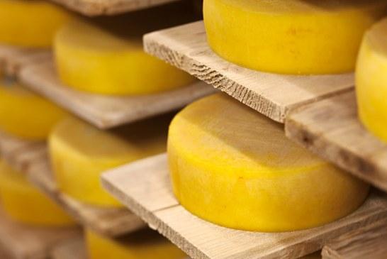 Nagyon egyszerű – Trappista sajt Házilag
