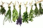 Tippek, hogyan tartósítsuk a friss FŰSZERnövényeinket