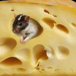 Végre kiderült, mitől lyukas a sajt – Forradalmi felfedezés svájci tudósoktól!