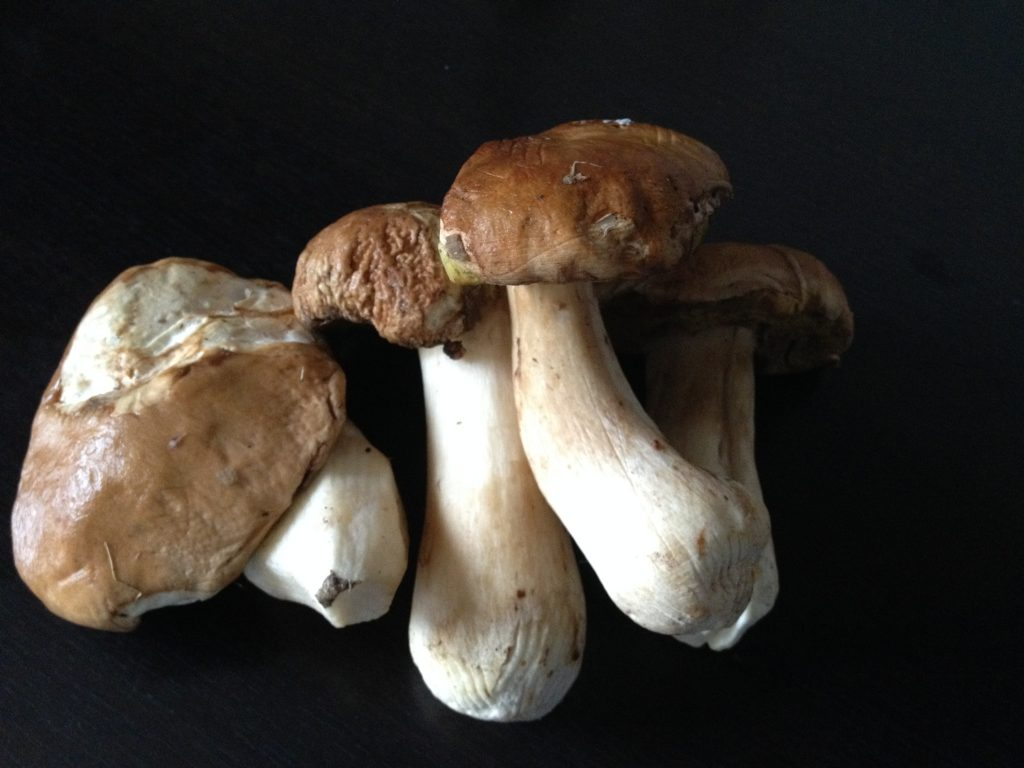 varganya-gomba-szosz-martas-gnocchi