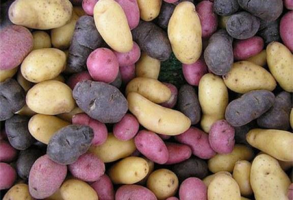 Milyen krumpliból készül a tökéletes sült krumpli?