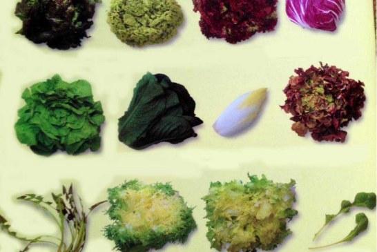 Van kedvetek egy kis JÁTÉKHOZ? – Hogy hívják ezen salátaféléket?