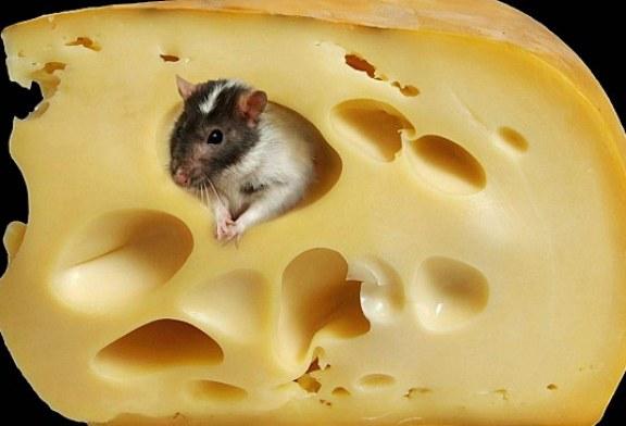 Végre kiderült, mitől lyukas a sajt - Forradalmi felfedezés svájci tudósoktól!