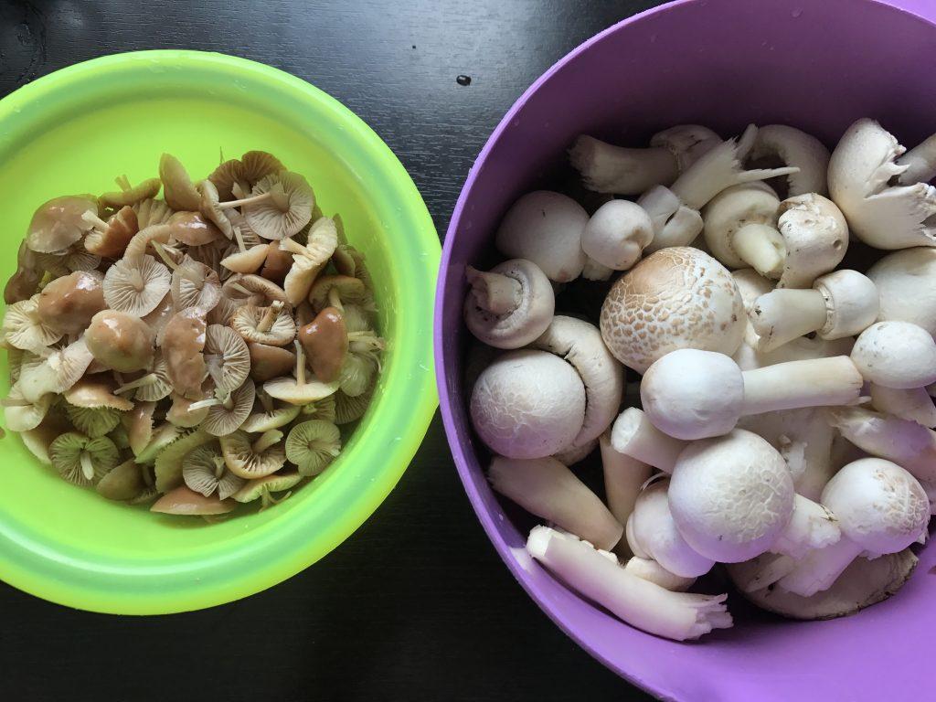 gombaleves recept